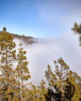 Der Teide im Nebel (Wolken) – Nationalpark 1