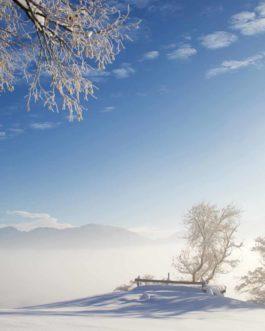 Winterlandschaft, Forggensee 1