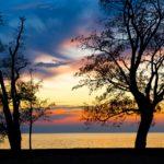 Baum Silhouette