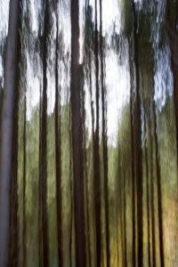 Abstrakt Wald 1