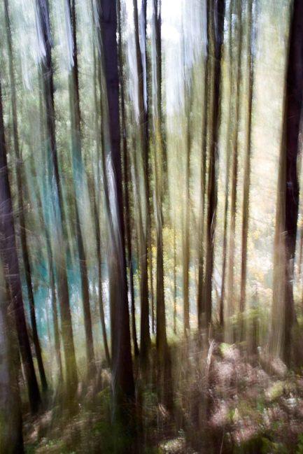 Abstrakt Wald 3