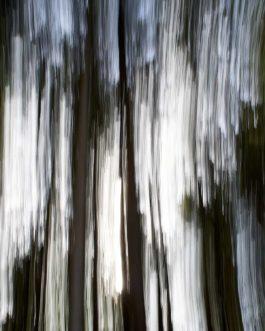 Bayerischer Wald Abstrakt 2