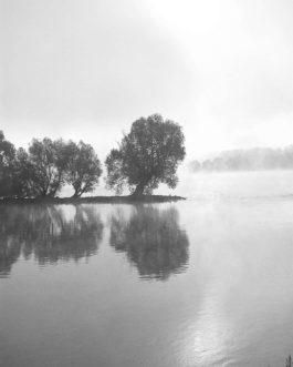 Morgennebel am Rhein 2