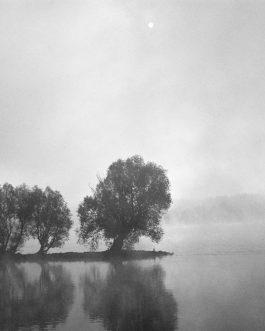 Morgennebel am Rhein 1